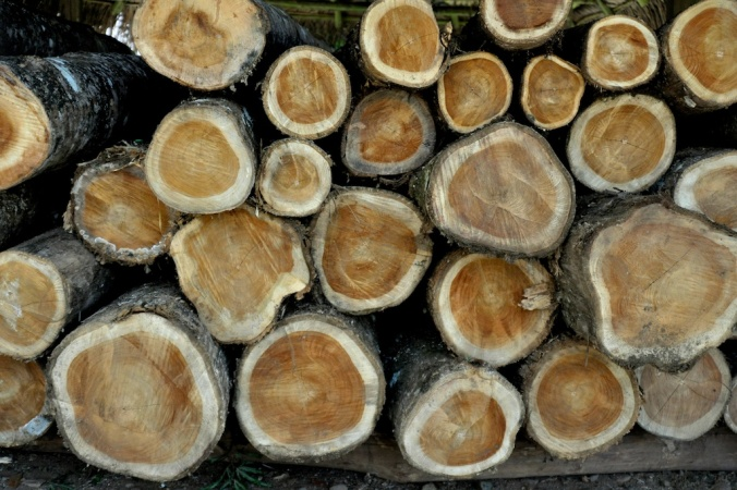 Teca/Teak logs various ages